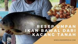 63365 small resep umpan bawal kacang