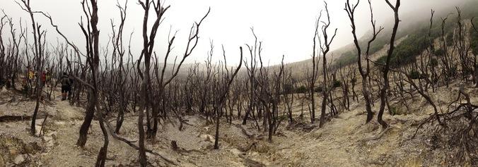 63533 medium hutan terancam punah kerena