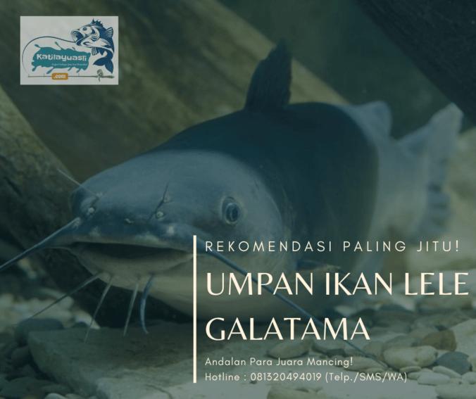 63538 medium rekomendasi umpan ikan lele galatama andalan para juara