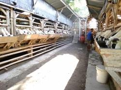 63952 small %28lowongan kerja%29 dibutuhkan tenaga kerja muslim untuk ternak domba di sleman dekat kampung flory %28walk in interview  wawancara langsung%29