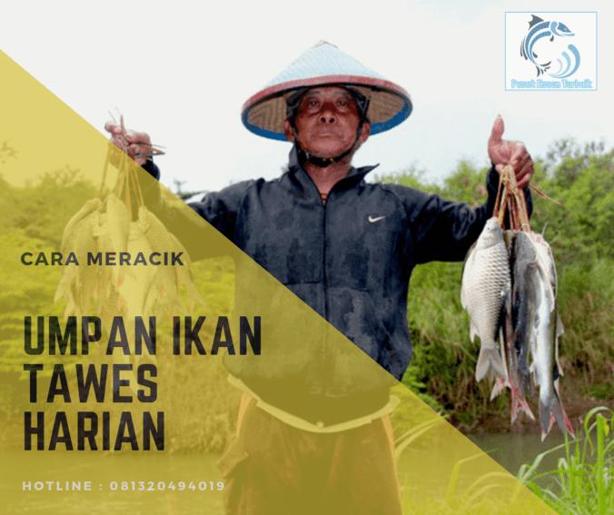 64297 medium rekomendasi umpan ikan tawes harian terbaru paling joss