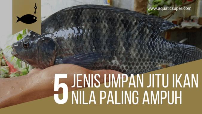 Inilah 5 Jenis Umpan Jitu Ikan Nila Paling Mantap Jaya Essen Di Cicalengka Bandung Kabupaten 20 Jun 2019 Berita Warga Atmago Warga Bantu Warga