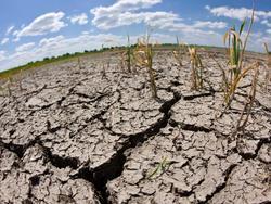 64408 small musim kemarau lebih cepat  400 hektar sawah di gunungkidul kekeringan