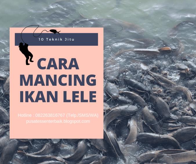 10 Teknik Jitu Cara Memancing Ikan Lele Paling Ampuh Essen Jitu Tasik Di Bandung Kabupaten 28 Jun 2019 Berita Warga Atmago Warga Bantu Warga