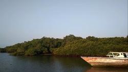 65080 small lamongan mangrove beach