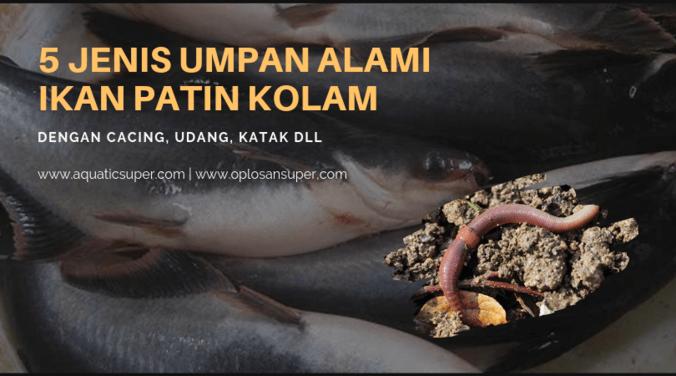 5 Jenis Umpan Alami Ikan Patin Kolam Rahasia Angler Jaya Essen Di Nagreg Bandung Kabupaten 6 Jul 2019 Berita Warga Atmago Warga Bantu Warga