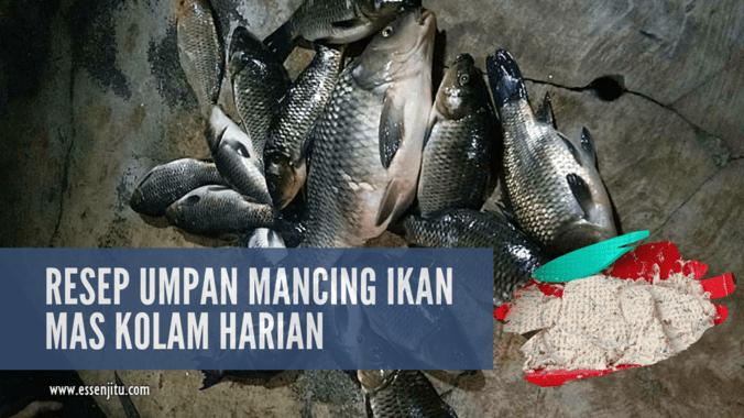 Tips Membuat Umpan Mancing Ikan Mas Kolam Harian Paling Gacor Jaya Essen Di Nagreg Bandung Kabupaten 12 Jul 2019 Berita Warga Atmago Warga Bantu Warga