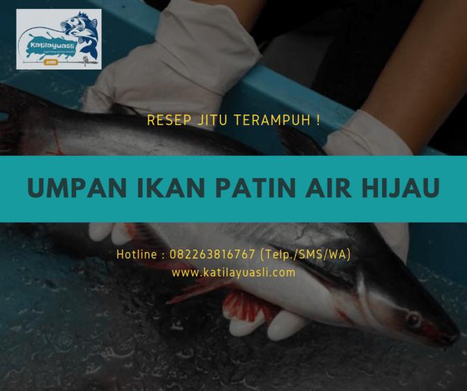 66495 medium resep jitu umpan ikan patin air hijau terampuh 2019