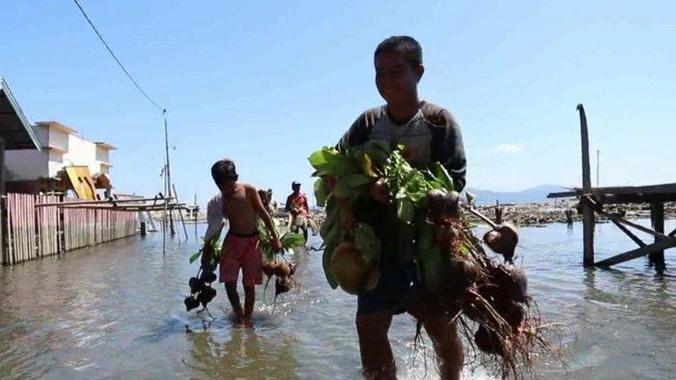 66621 medium warga pesisir donggala tanam pohon butun untuk ciptakan desa tangguh bencana %282%29