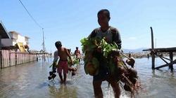 66621 small warga pesisir donggala tanam pohon butun untuk ciptakan desa tangguh bencana %282%29