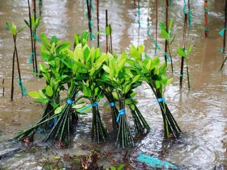 66994 medium pulihkan kawasan pesisir  pemprov dki jakarta bersama elemen masyarakat tanam mangrove