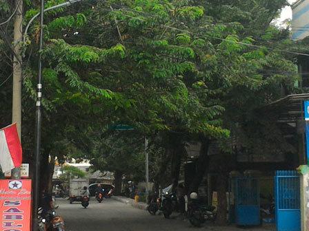6869 medium warga minta pohon di jl nirmala raya dipangkas