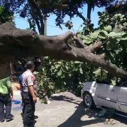 70452 small pohon tumbang timpa mobil di universitas pancasila  1 orang tewas