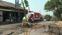 70584 small warga lebak tanam pohon pisang di jalan rusak dan berdebu