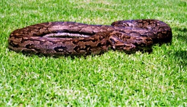 7259 medium banyak ular di tangsel  ternyata ada di perumahan elite