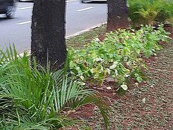 755 small tanaman hias ditanam di taman jl jenderal sudirman