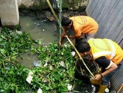 7658 small 3 ton sampah diangkut dari kali mookervart