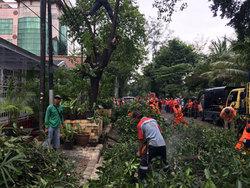 7660 small 15 pohon di jl susilo raya dipangkas