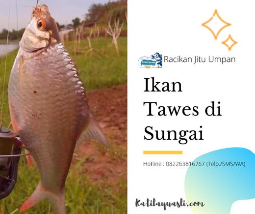 Racikan Umpan Ikan Tawes Di Sungai Murah Dan Sederhana Essen Jitu Tasik Di Bandung Kota 9 Nov 2019 Berita Warga Atmago Warga Bantu Warga