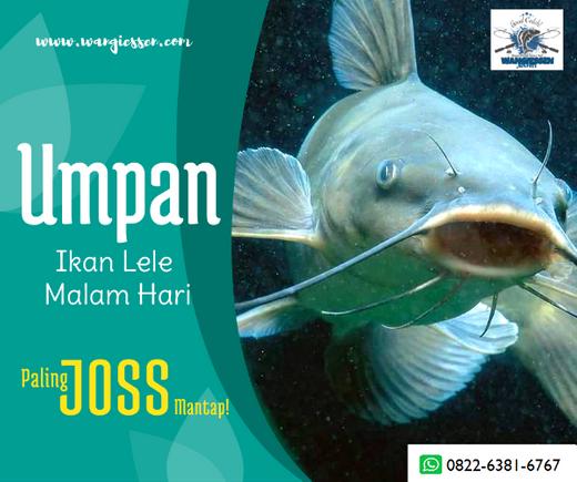 Umpan Jitu Ikan Lele Malam Hari Terbaik Paling Joss Essen Jitu Tasik Di Bandung Kota 20 Nov 2019 Berita Warga Atmago Warga Bantu Warga