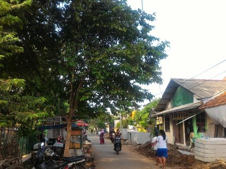 8350 medium 80 pohon tumbang di jakbar