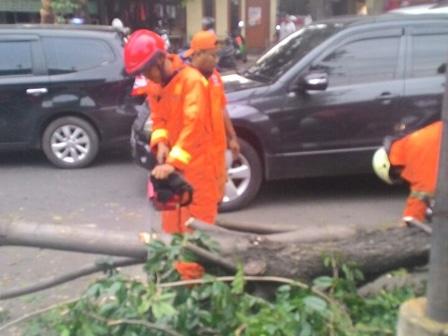 8363 medium pohon tumbang