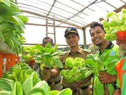 838 small rusun jatinegara kaum kembangkan tanaman hidroponik