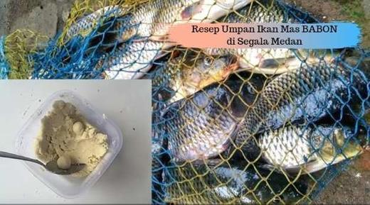 Umpan Mancing Ikan Mas Subangan Paling Joss Jaya Essen Di Pameungpeuk 29 Feb 2020 Berita Warga Atmago Warga Bantu Warga