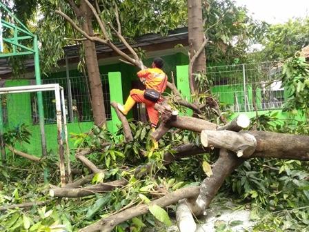 8762 medium pohon tumbang