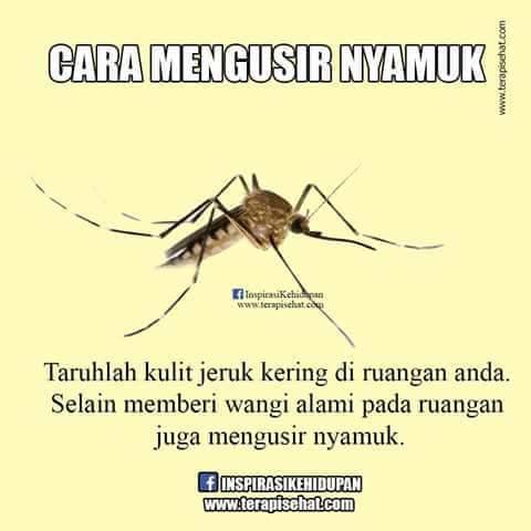 09 nyamuk
